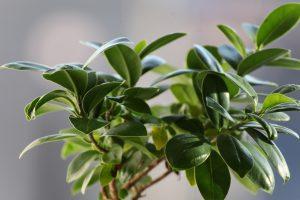 planten met grote bladeren voor het atelier
