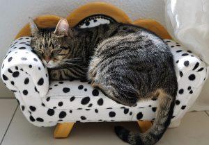 kat op sofa