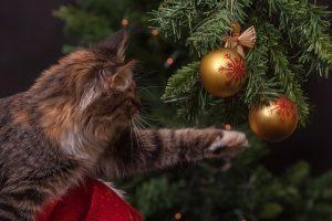kat aan de kerstballen